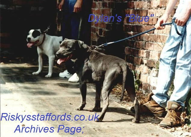 Kaos Kennels Staffordshire Bull Terrier