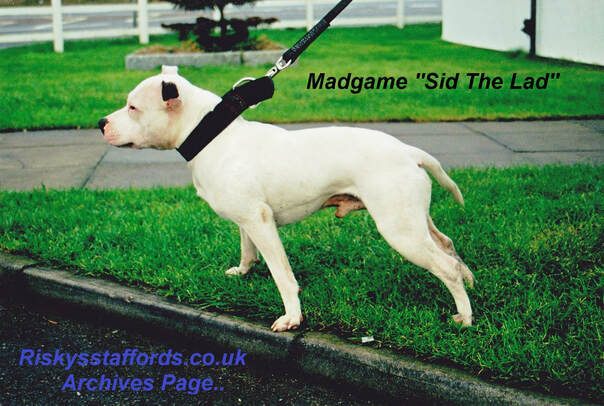 Madgame Sid The Lad