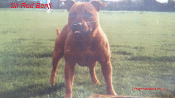 Sir Red Benji, Old School Stafford.